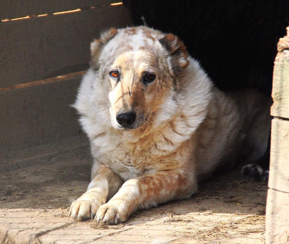 собака под опеку из приюта zovpredkov.net