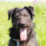 Цезарь собака из приюта на пристройство приют для бездомных животных Зов Предков zovpredkov.net