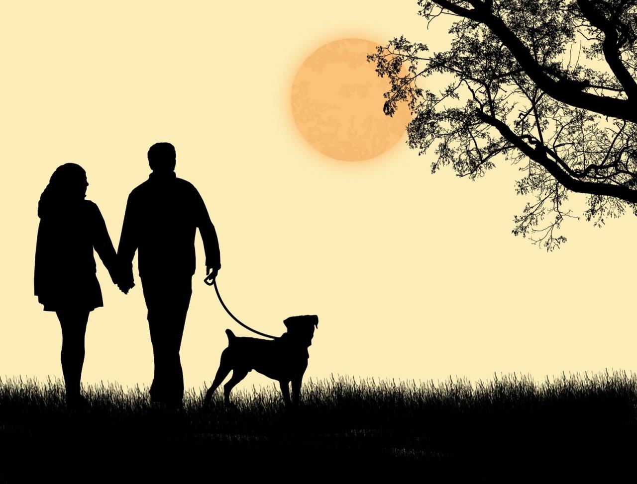 картинка как взять собаку из приюта