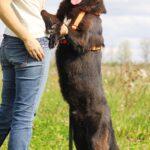 Барон собака из приюта на пристройство, частный приют для бездомных животных Зов Предков zovpredkov.net фото 6