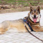 Дина собака из приюта на пристройство приют для бездомных животных Зов Предков zovpredkov.net фото 1