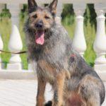 Перец собака из приюта на пристройство, частный приют Зов Предков zovpredkov.net фото 14