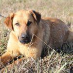 Бронза собака из приюта на пристройство zovpredkov.net фото16