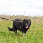 Барон собака из приюта на пристройство, частный приют для бездомных животных Зов Предков zovpredkov.net фото 8