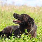 Барон собака из приюта на пристройство, частный приют для бездомных животных Зов Предков zovpredkov.net фото 9