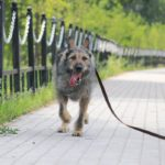 Перец собака из приюта на пристройство, частный приют Зов Предков zovpredkov.net фото 9