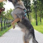 Перец собака из приюта на пристройство, частный приют Зов Предков zovpredkov.net фото 10
