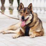 Дина собака из приюта на пристройство приют для бездомных животных Зов Предков zovpredkov.net фото 2