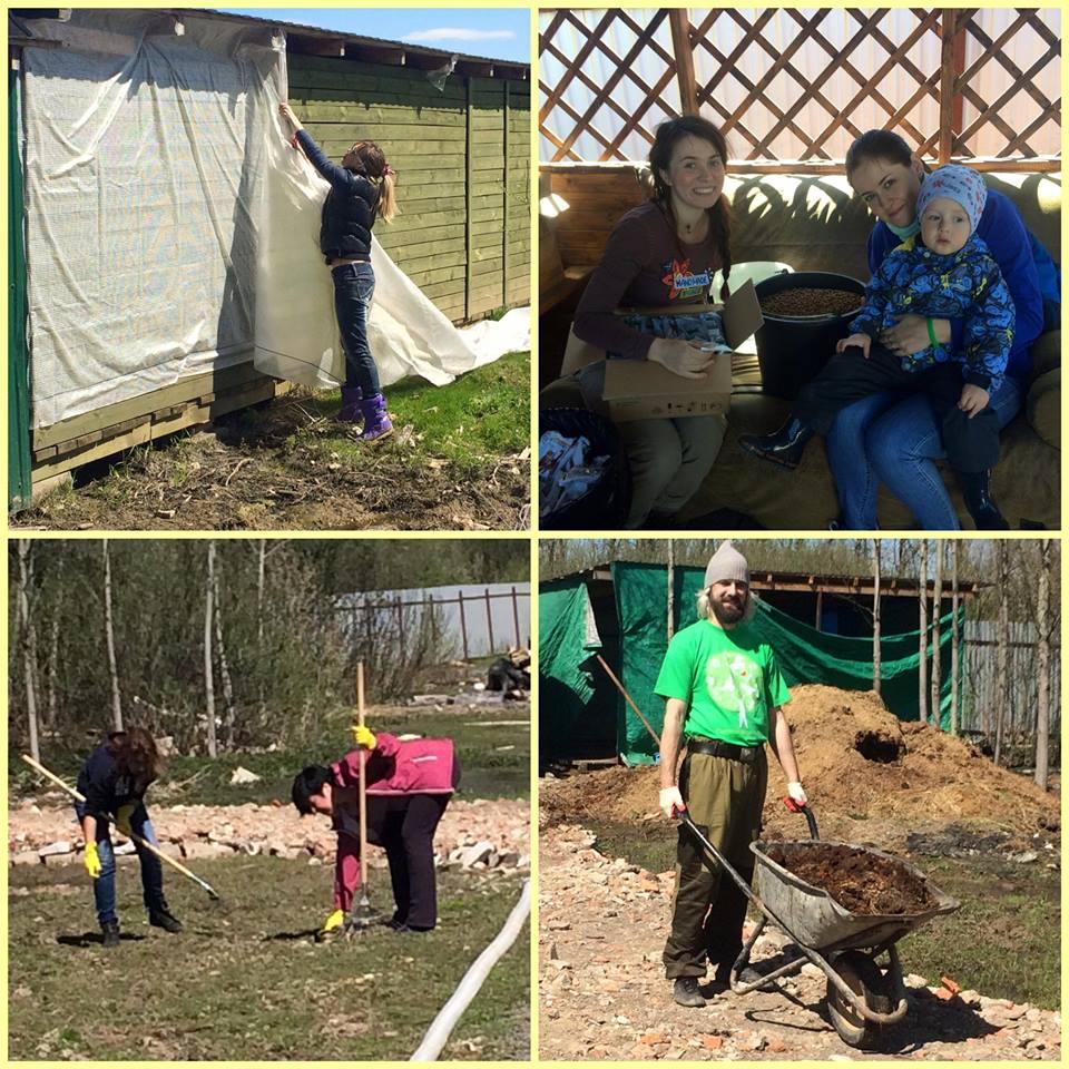 субботник в приюте Зов Предков, приют для бездомных животных