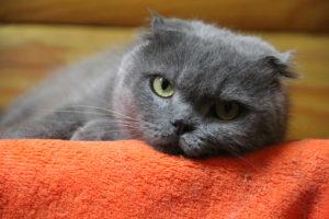 Трюфель кошка из приюта под опеку
