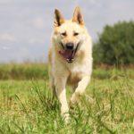 Ирбис собака из приюта на пристройство приют для бездомных животных Зов Предков zovpredkov.net фото 5