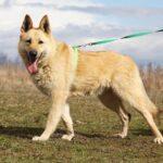 Ирбис собака из приюта на пристройство приют для бездомных животных Зов Предков zovpredkov.net фото 14