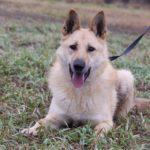 Ирбис собака из приюта на пристройство приют для бездомных животных Зов Предков zovpredkov.net фото 11