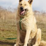 Ирбис собака из приюта на пристройство приют для бездомных животных Зов Предков zovpredkov.net фото 13