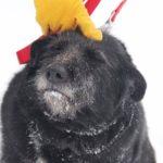 Шанель собака из приюта на пристройство Зов Предков zovpredkov.net фото5
