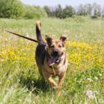 Титан собака из приюта Зов Предков zovpredkov.net фото 8