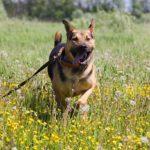 Титан собака из приюта Зов Предков zovpredkov.net фото 6