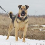 Титан собака из приюта Зов Предков zovpredkov.net фото 12