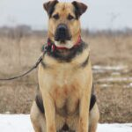 Титан собака из приюта Зов Предков zovpredkov.net фото 14