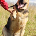 Титан собака из приюта на пристройство частный приют для собак Зов Предков zovpredkov.net фото 21