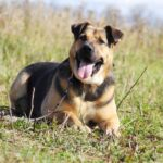 Титан собака из приюта на пристройство частный приют для собак Зов Предков zovpredkov.net фото 24