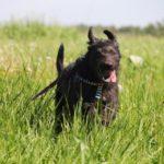 Цезарь собака из приюта на пристройство приют для бездомных животных Зов Предков zovpredkov.net фото 3