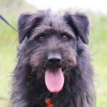 Цезарь собака из приюта на пристройство приют для бездомных животных Зов Предков zovpredkov.net фото 11