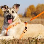Долька собака из приюта на пристройство, частный приют Зов Предков zovpredkov.net фото 7