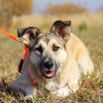 Долька собака из приюта на пристройство, частный приют Зов Предков zovpredkov.net фото 3
