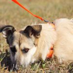 Долька собака из приюта на пристройство, частный приют Зов Предков zovpredkov.net фото 4