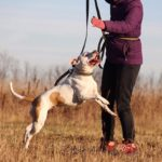 Джульетта собака из приюта на пристройство, частный приют Зов Предков zovpredkov.net фото 2