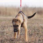 Айрис собака из приюта на пристройство приют для бездомных животных Зов Предков zovpredkov.net фото 11