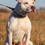 Джульетта собака из приюта на пристройство, частный приют Зов Предков zovpredkov.net фото 7