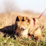 Айрис собака из приюта на пристройство приют для бездомных животных Зов Предков zovpredkov.net фото 5