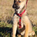 Айрис собака из приюта на пристройство приют для бездомных животных Зов Предков zovpredkov.net фото 2