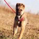 Айрис собака из приюта на пристройство приют для бездомных животных Зов Предков zovpredkov.net фото 6