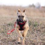 Айрис собака из приюта на пристройство приют для бездомных животных Зов Предков zovpredkov.net фото 12