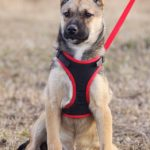 Айрис собака из приюта на пристройство приют для бездомных животных Зов Предков zovpredkov.net фото 14
