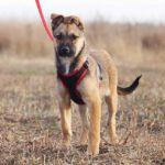Айрис собака из приюта на пристройство приют для бездомных животных Зов Предков zovpredkov.net фото 13