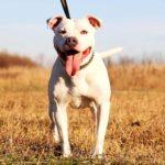 Джульетта собака из приюта на пристройство, частный приют Зов Предков zovpredkov.net фото 6