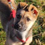 Айрис собака из приюта на пристройство приют для бездомных животных Зов Предков zovpredkov.net фото 1