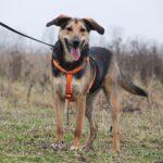 Липтон собака из приюта на пристройство, частный приют Зов Предков zovpredkov.net фото 7