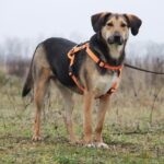 Липтон собака из приюта на пристройство, частный приют Зов Предков zovpredkov.net фото 6