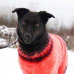 Хейли собака из приюта на пристройство, частный приют Зов Предков zovpredkov.net фото 6