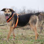 Липтон собака из приюта на пристройство, частный приют Зов Предков zovpredkov.net фото 5