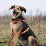 Липтон собака из приюта на пристройство, частный приют Зов Предков zovpredkov.net фото 9