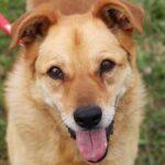 Дюшес собака из приюта на пристройство, частный приют для бездомных животных Зов Предков zovpredkov.net фото 8