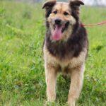 Фома собака из приюта на пристройство, частный приют для бездомных животных Зов Предков zovpredkov.net фото 4
