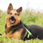 Эллада собака из приюта на пристройство, частный приют для бездомных животных Зов Предков zovpredkov.net фото 6