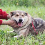 Донна собака из приюта на пристройство, частный приют для бездомных животных Зов Предков zovpredkov.net фото 9